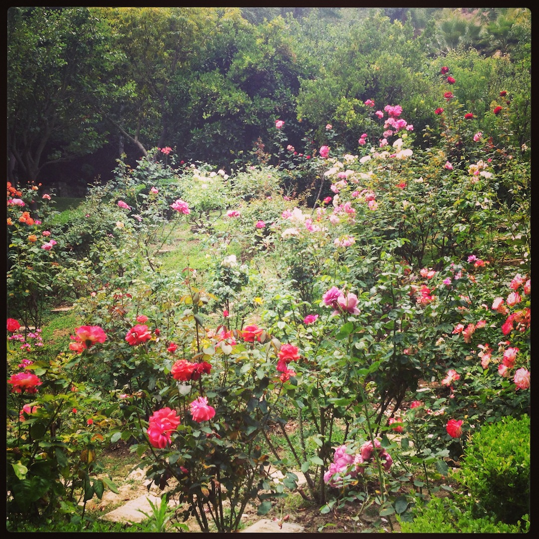 Rose Garden Freeman Gardens: MOMMA PLEASE??? Floral Print Dresses That Make Me Wish I